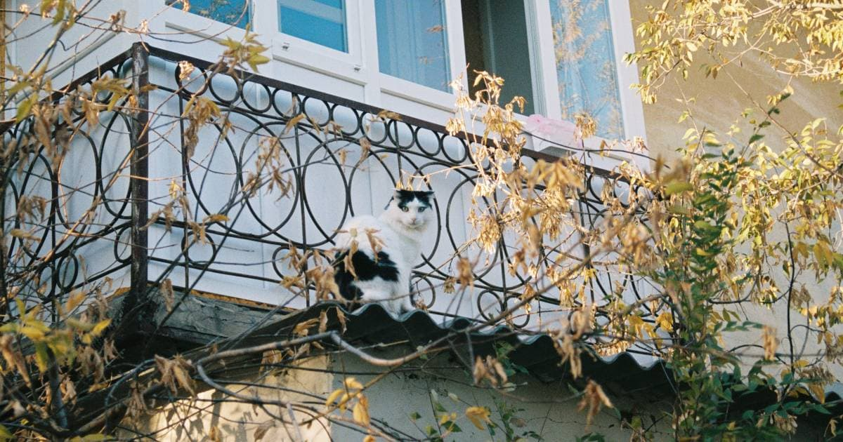 Darf ich ein Katzennetz am Balkon anbringen?