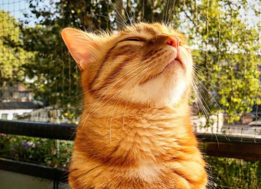 Lieber sicher: Ein Katzennetz am Balkon schützt die Nerven von allen Mitbewohner*innen